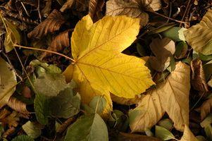 Proyectos de Ciencias en las hojas Cambiar colores