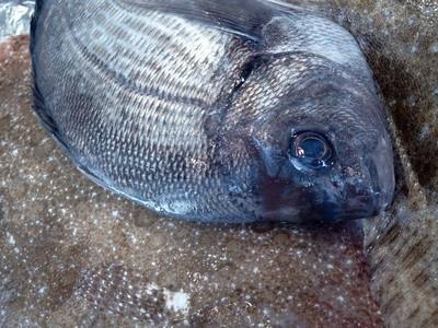 Cómo saber la edad de los peces a partir de muestras de escala