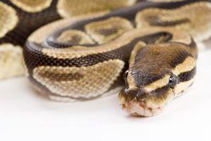 Hibernación y adaptaciones en las serpientes