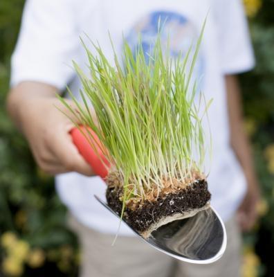 Los experimentos de hierba en crecimiento