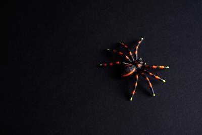 Las arañas que se parecen a las viudas negras femeninas