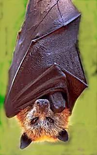 Datos interesantes sobre los murciélagos