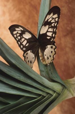 Similitudes y diferencias entre las mariposas y polillas
