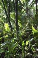 Características abióticos que afectan a los bosques lluviosos tropicales