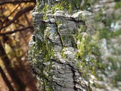 ¿Qué fuerza puede causar un cambio en el ciclo de las rocas?