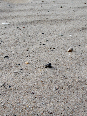 Cómo conducir en la arena con los neumáticos de estructura 10
