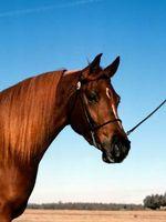 Lo que debe saber para juzgar caballo