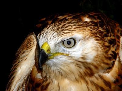 Datos acerca de las aves de América del Norte